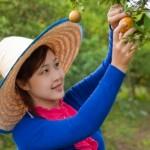 Co pěstovat na zahradě?
