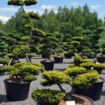 Ozvláštněte svoji okrasnou zahradu s pomocí tisu