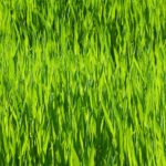 Umělý trávník a jeho možnosti