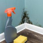 Jak odstranit plíseň v bytě