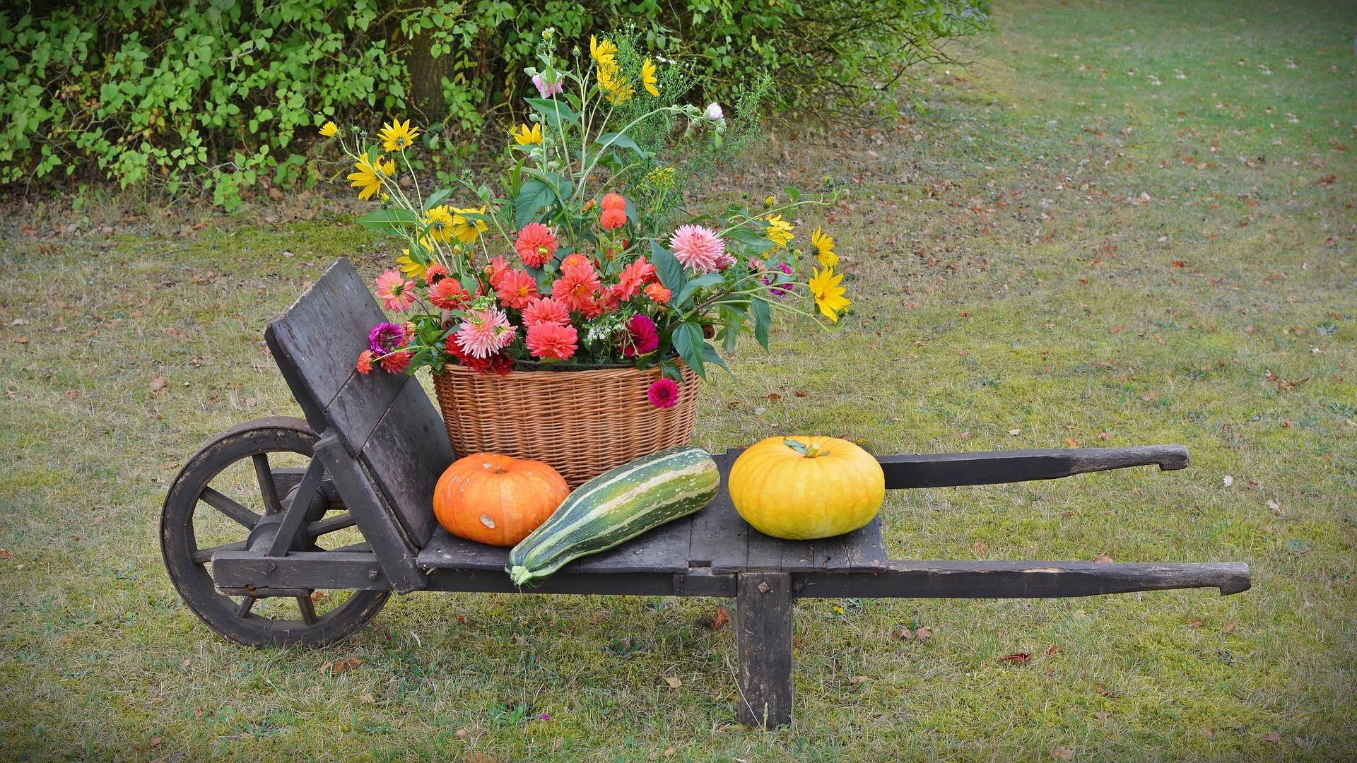 Dekorace dozinky dyne zahrada